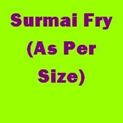 Surmai Fry As Per Size